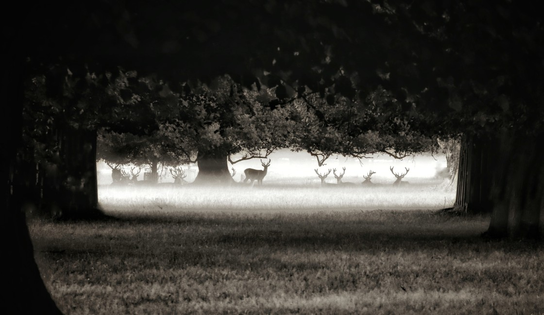 """""""Stags in the mist"""" stock image"""