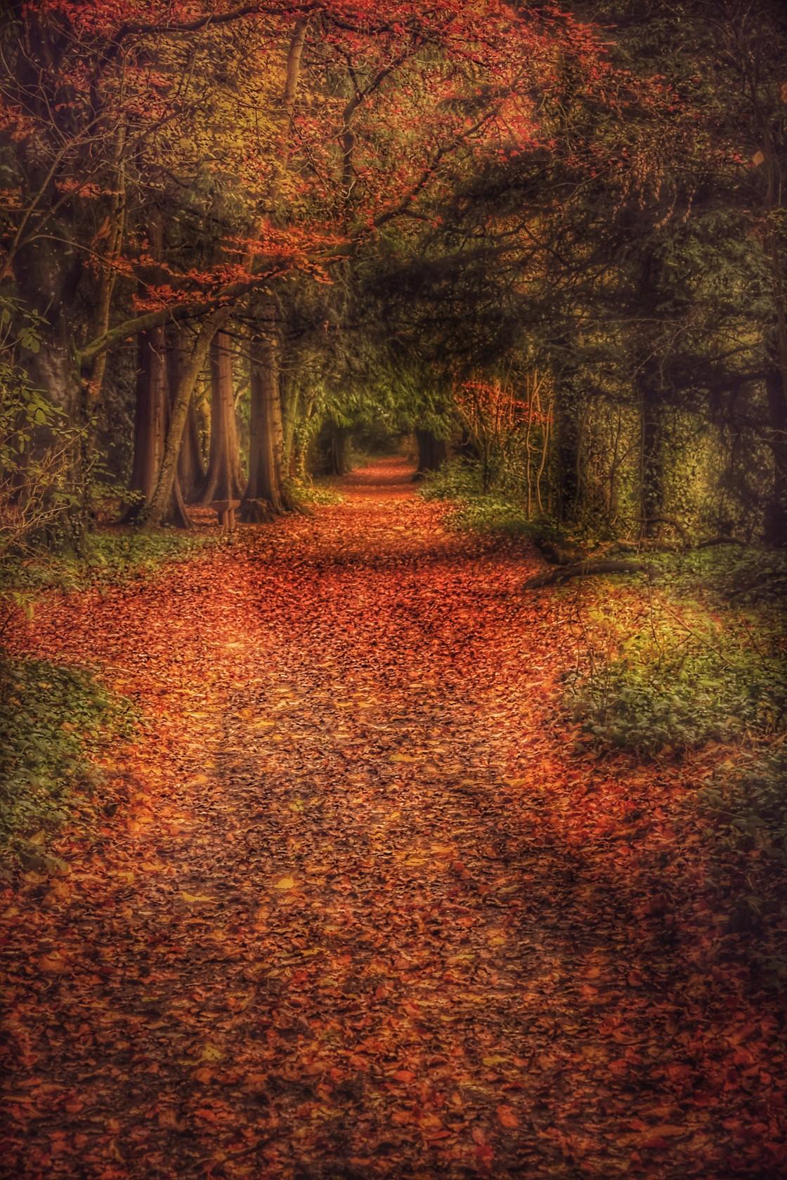 """""""Autumn Woodland Walk"""" stock image"""
