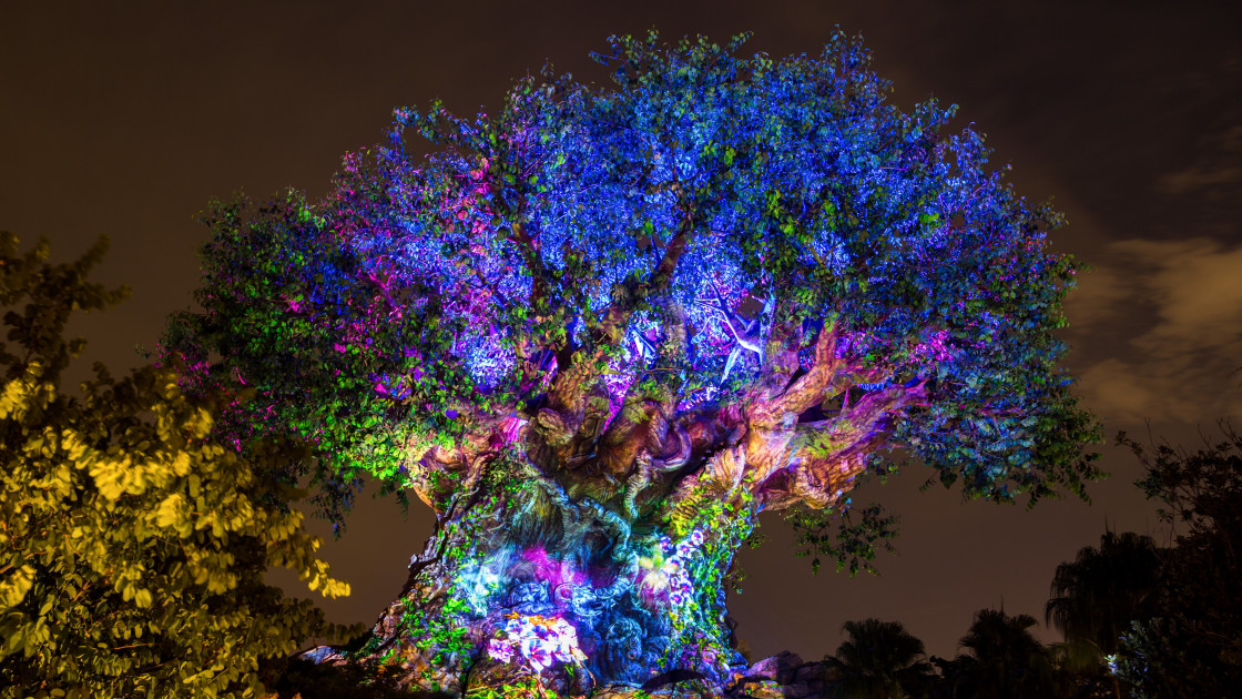 """Tree of Life"" stock image"