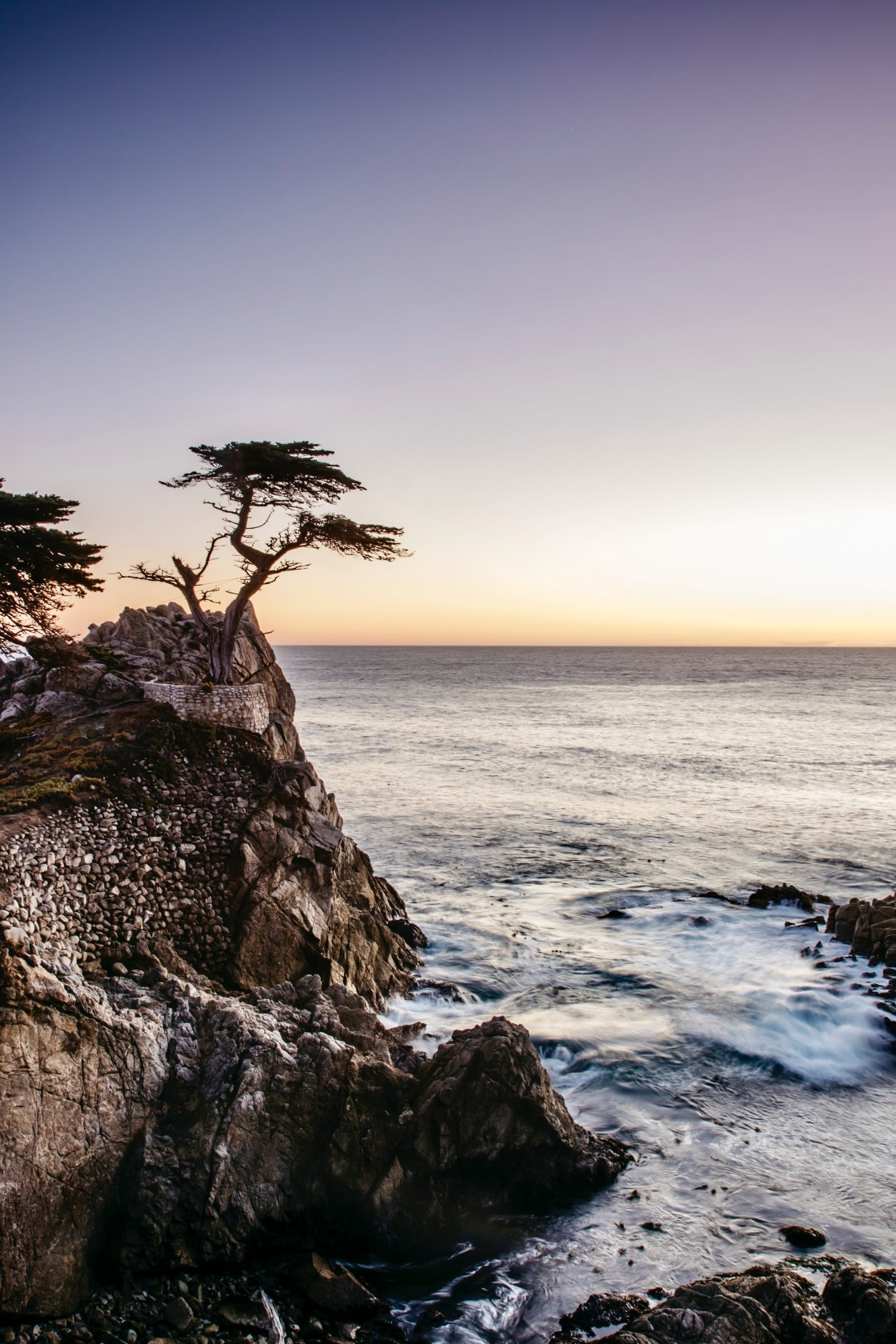"""The Lone Cypress"" stock image"