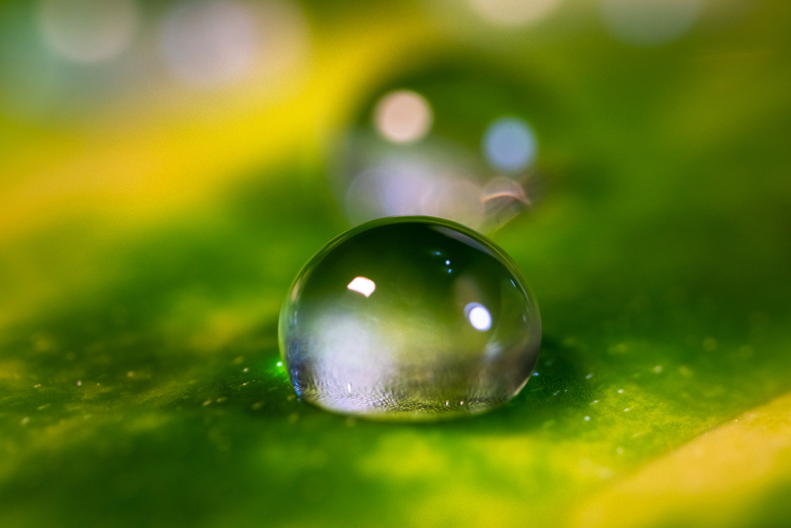 """Rain drop on a green leaf of plant - macro shot"" stock image"