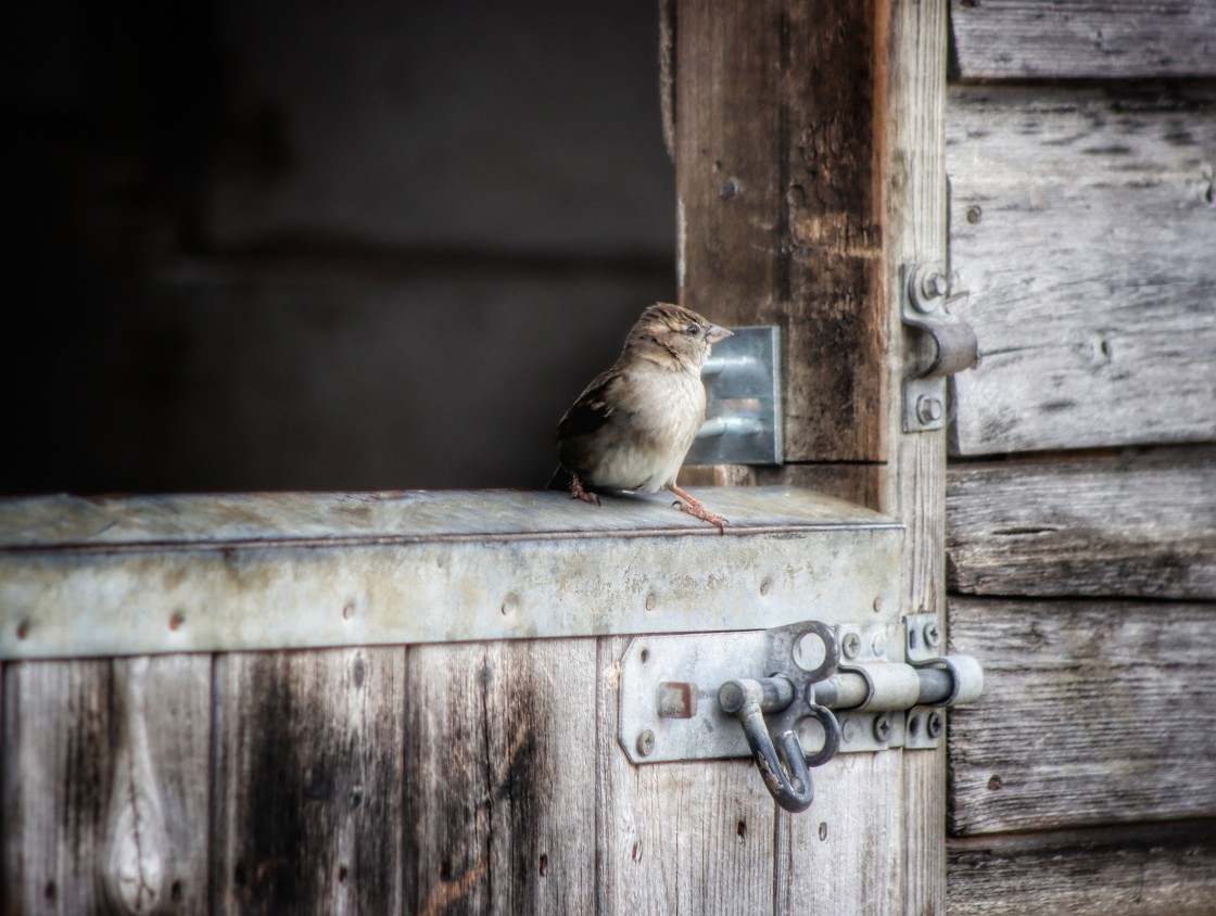 """""""Sheltering sparrow"""" stock image"""