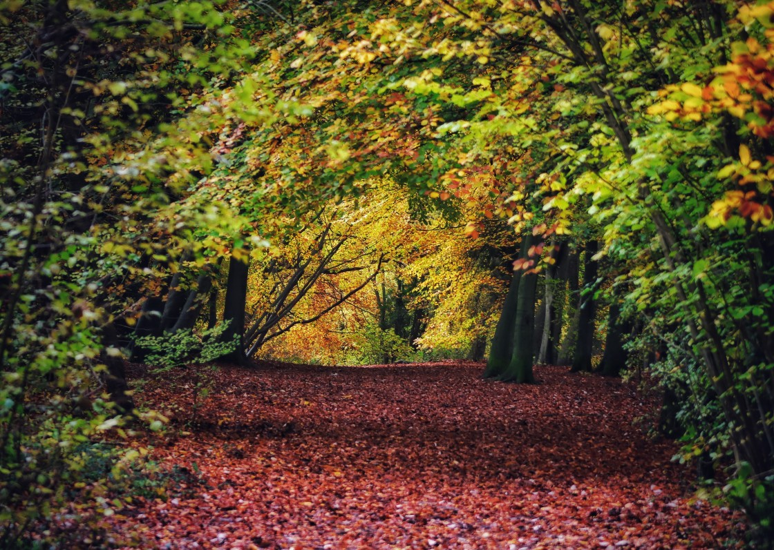 """""""Ancient woodlands in Autumn"""" stock image"""