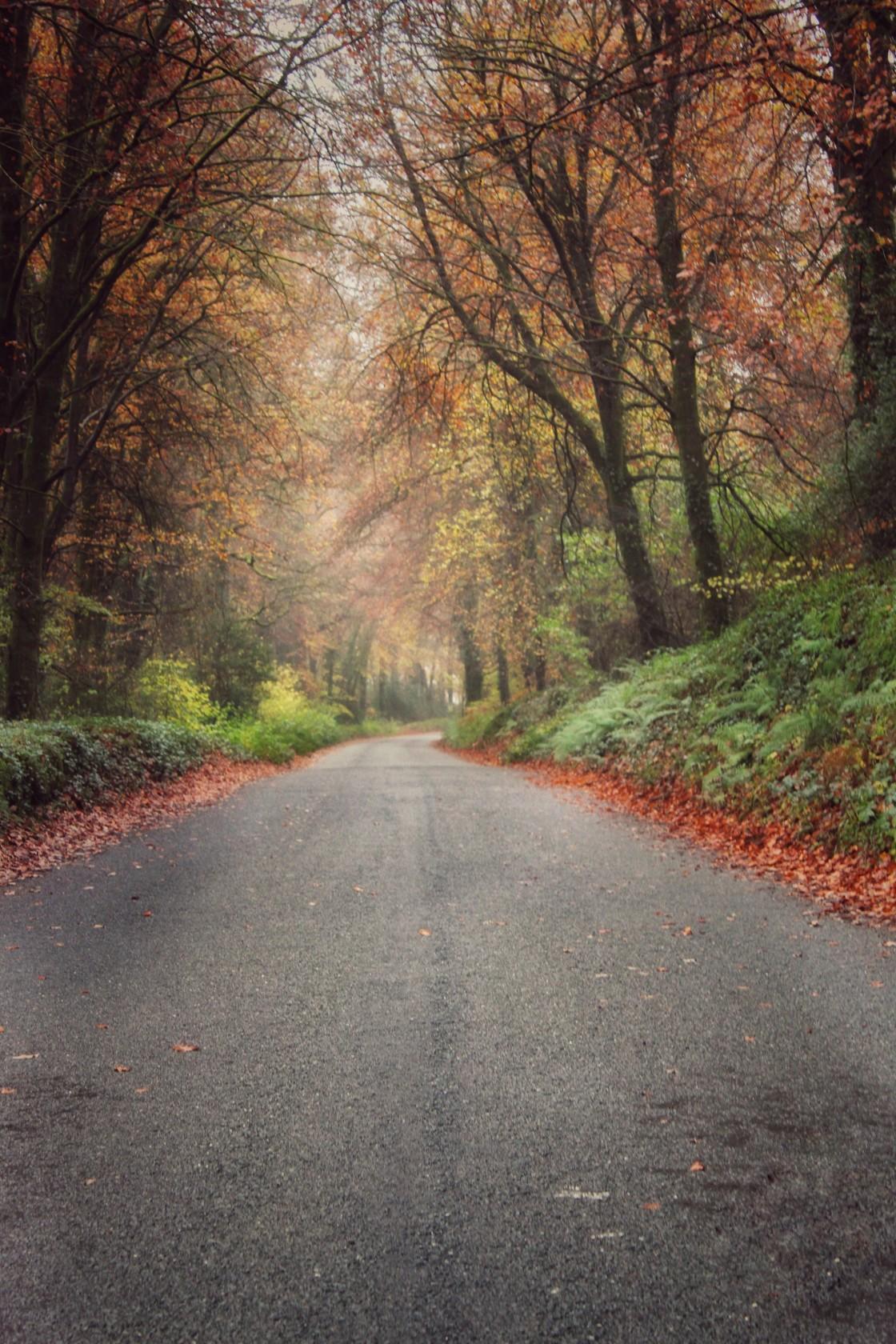 """Autumn Road"" stock image"