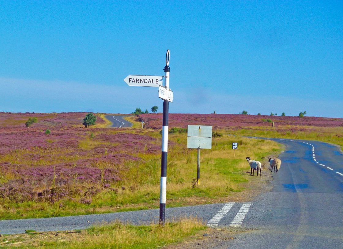 """Rush hour on the North Yorkshire Moors"" stock image"