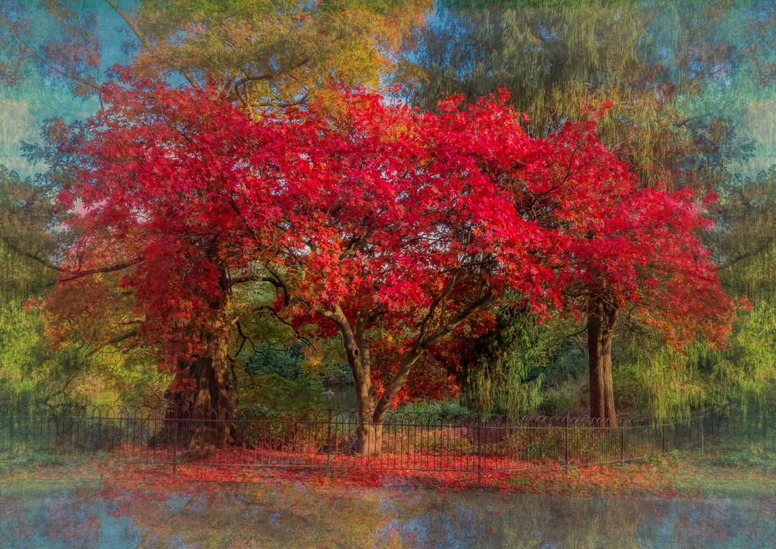 """""""The Red Tree, Greenwich Park, London"""" stock image"""