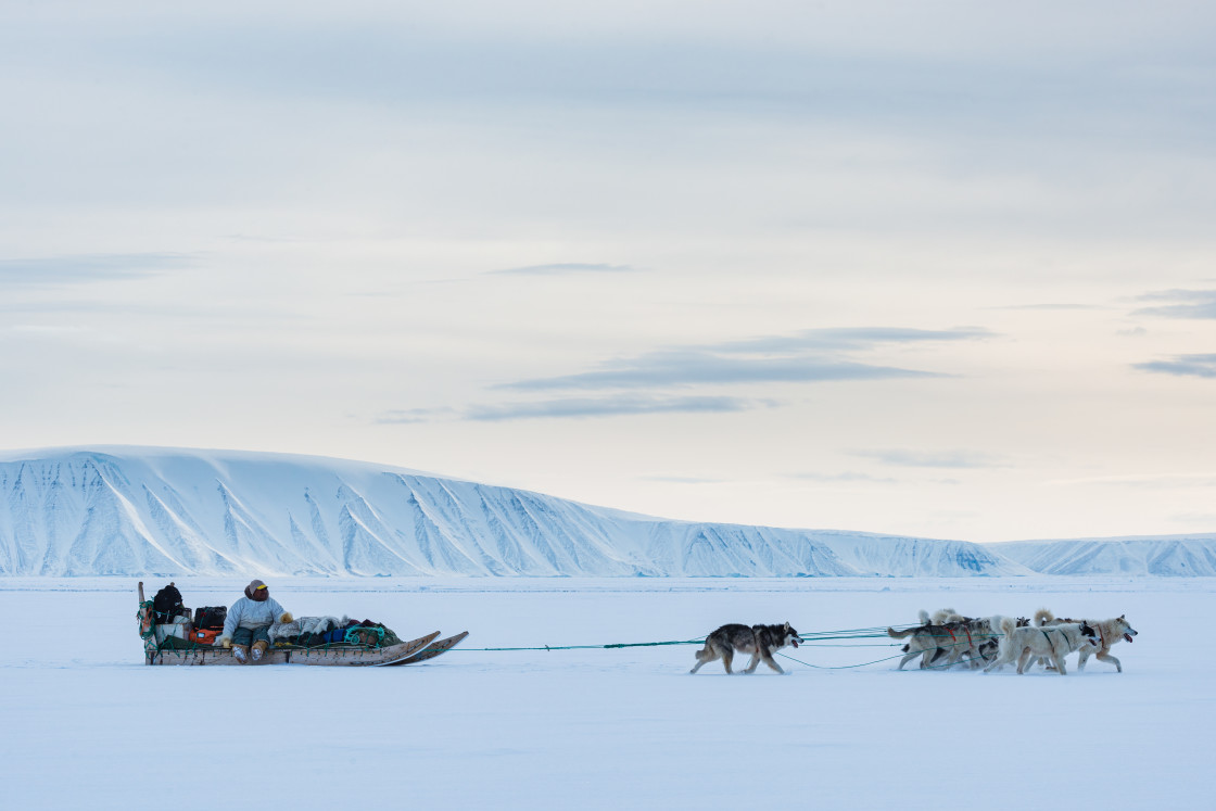 """Dog sledding on frozen sea"" stock image"