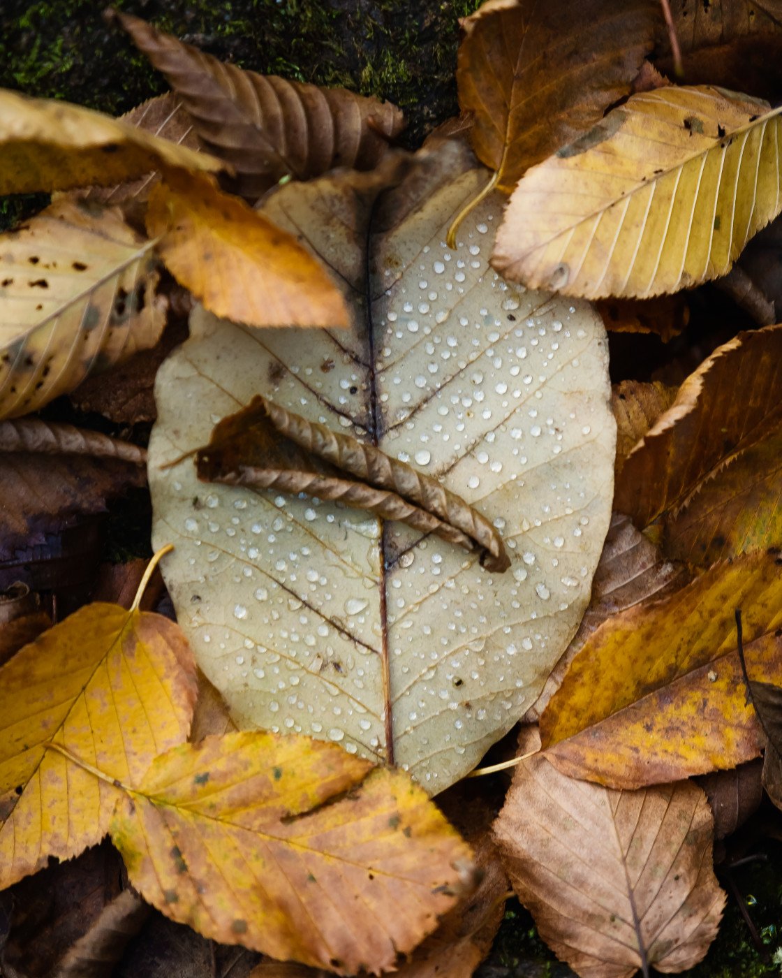 """Rain on Leaves"" stock image"