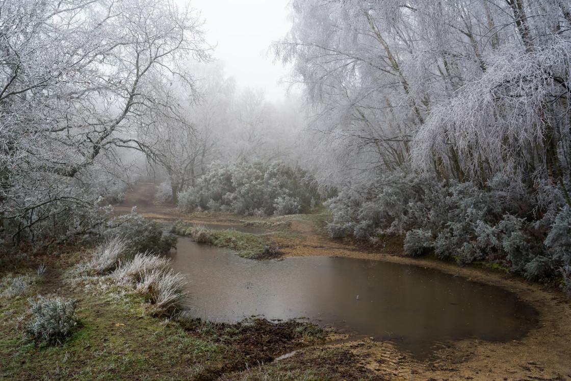 """""""Freezing Fog"""" stock image"""
