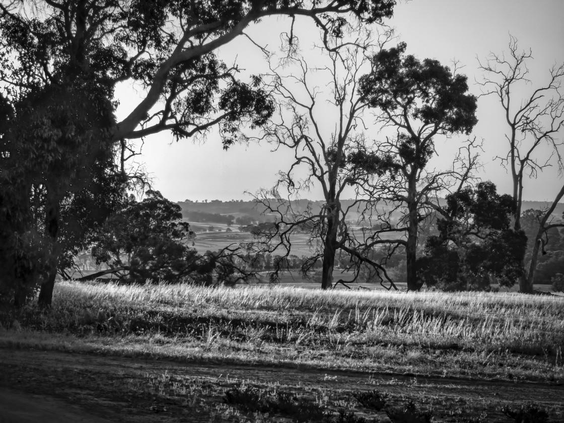 """Wheatbelt Farm Scene 2"" stock image"
