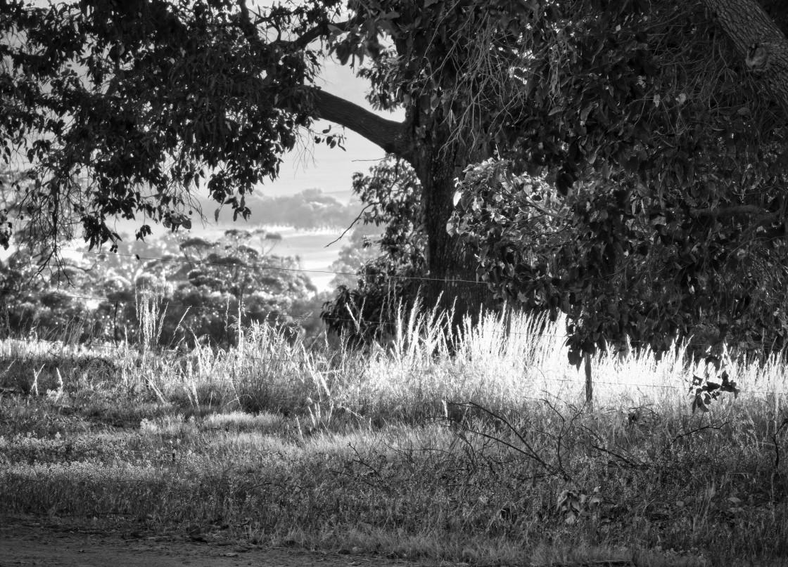 """Wheatbelt Farm Scene"" stock image"