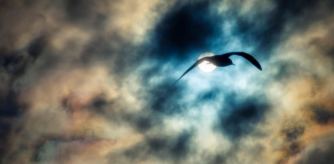 """Sky Magic, Part II ~ Greenwich Park, London"" stock image"