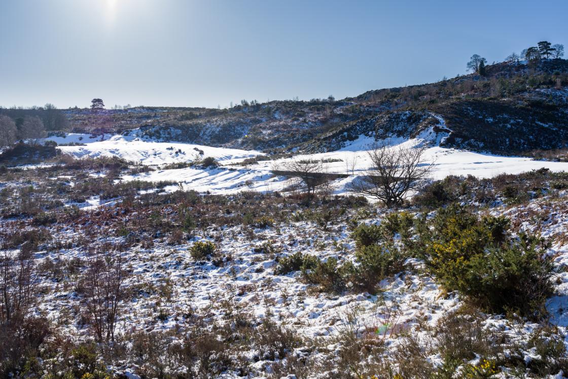 """Sunny Winter Scene"" stock image"