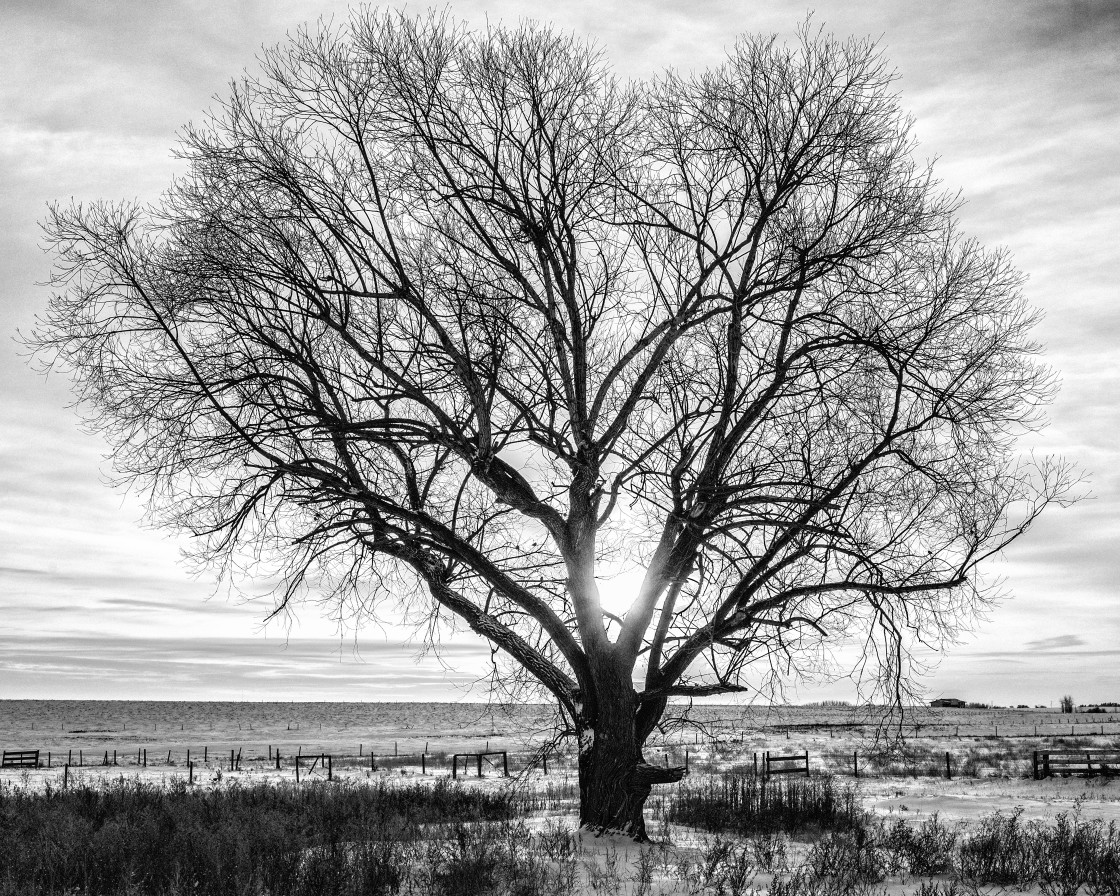 """Sunrise through the tree"" stock image"