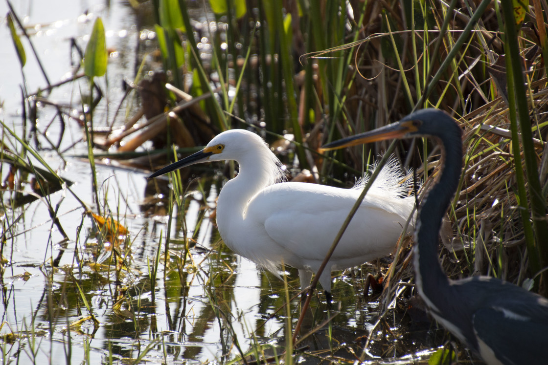 """""""Two Teenagers, A Great Egret And A Blue Heron"""" stock image"""