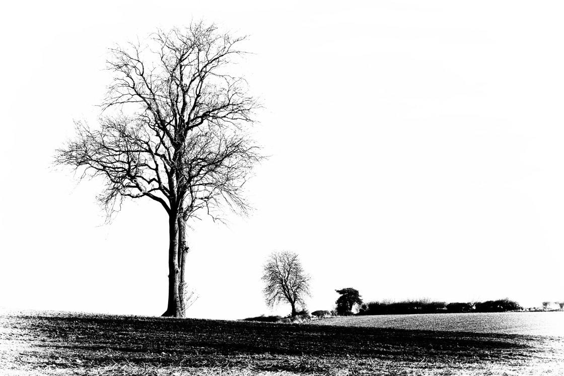 """Big Tree and Little Tree"" stock image"