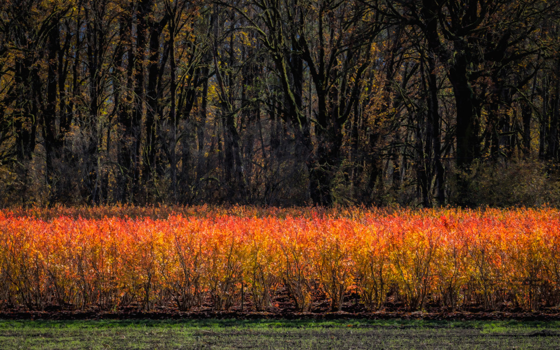 """Dark Side Of Autumn"" stock image"