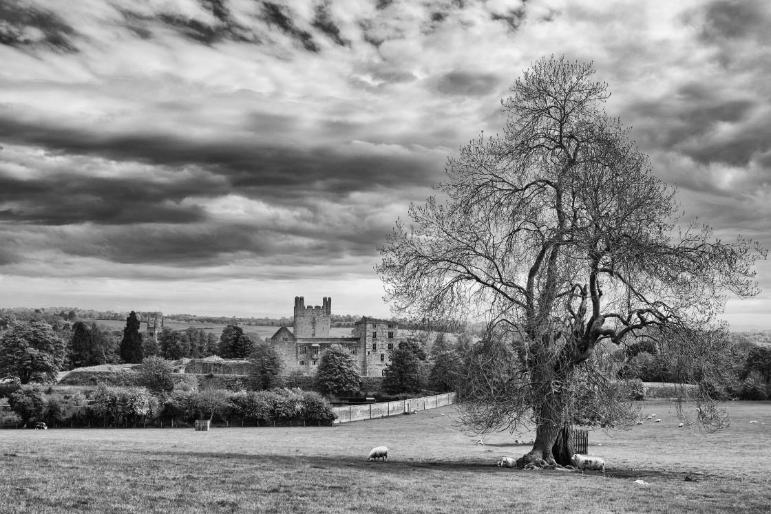 """Helmsley Castle Treescape"" stock image"