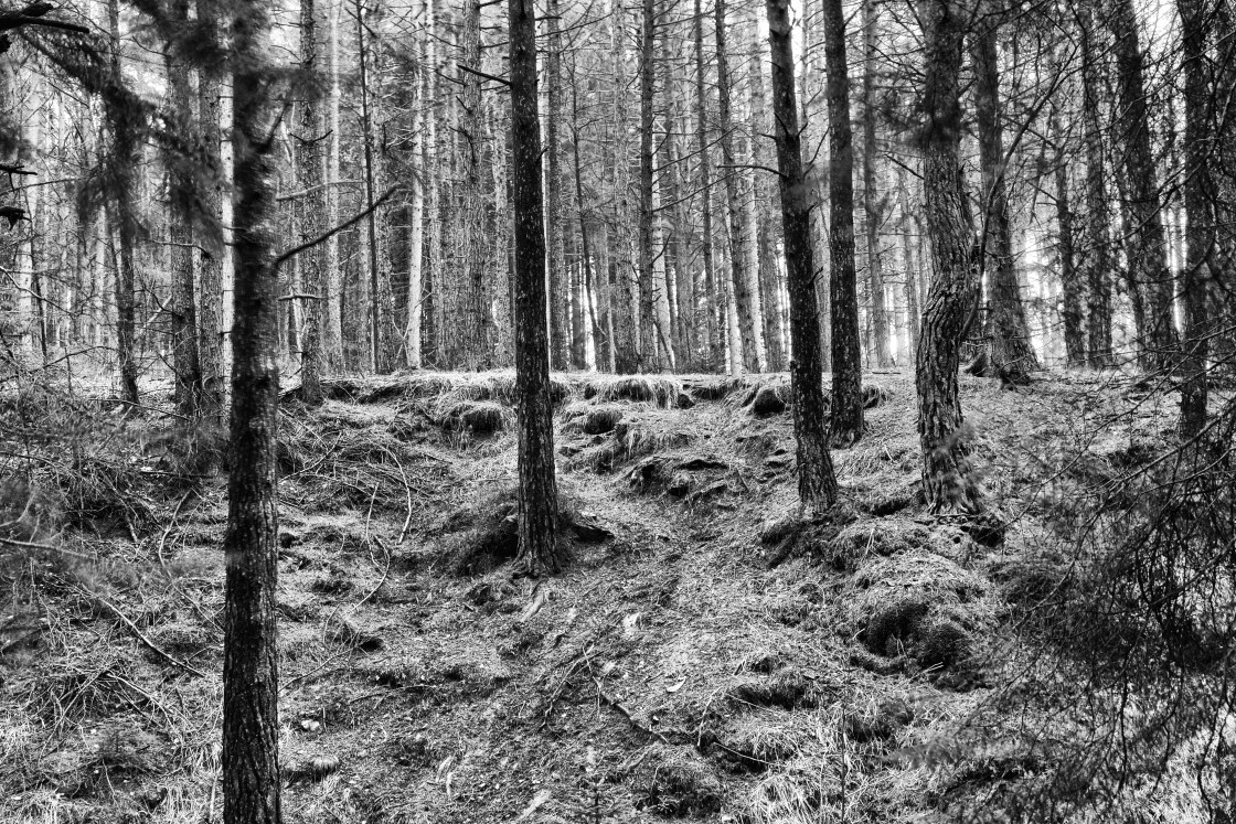 """""""Light in Cropton Forest"""" stock image"""