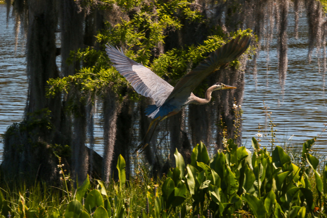 """An Oasis For Wild Birds Leesburg Florida"" stock image"