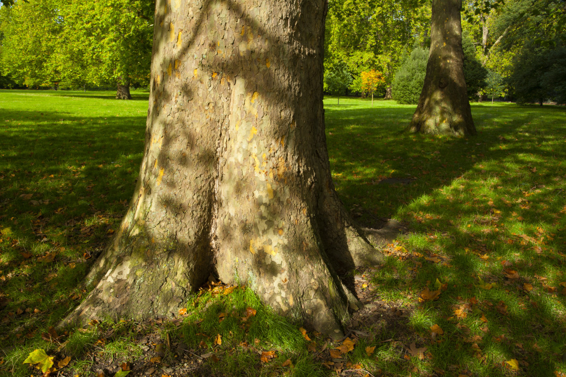 """""""England, Greater London, Hyde Park."""" stock image"""
