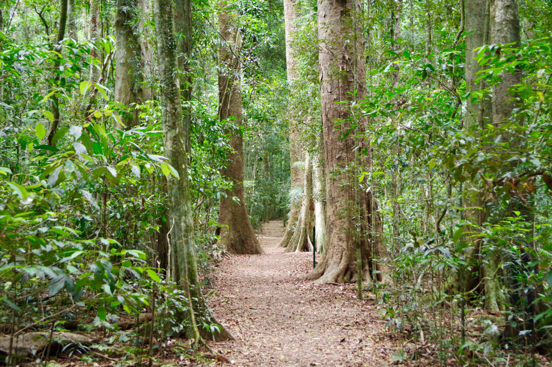 """""""Walking Track Mary Cairncross Scenic Reserve"""" stock image"""