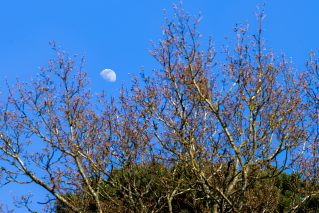 """Daylight Moon"" stock image"