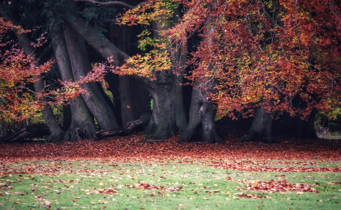 """""""Autumn in Red"""" stock image"""