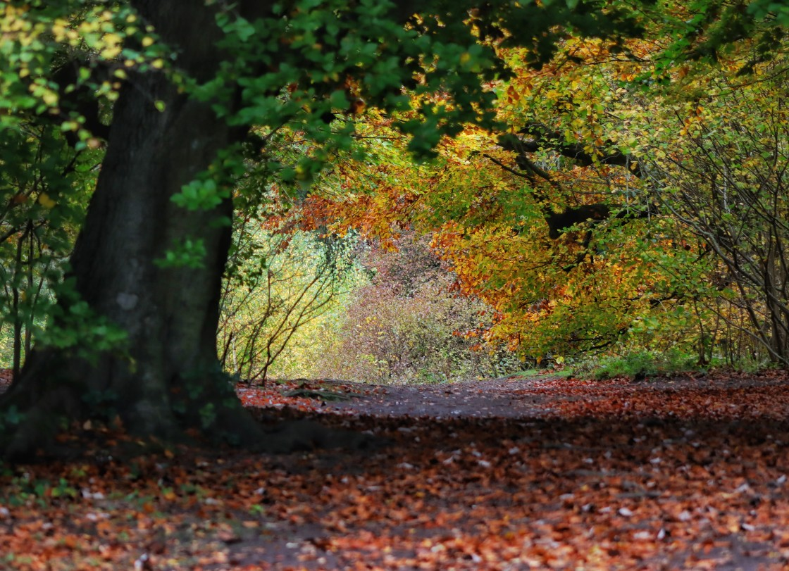 """""""Autumn in the Ancient Woodland"""" stock image"""