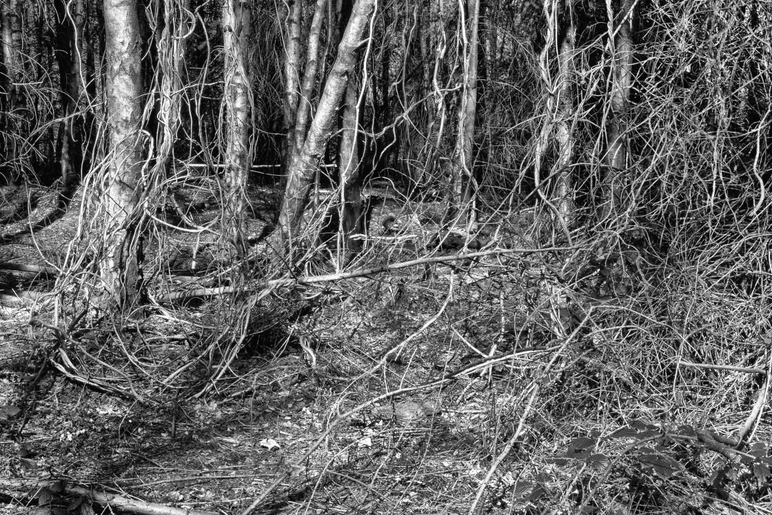 """Among the Undergrowth"" stock image"