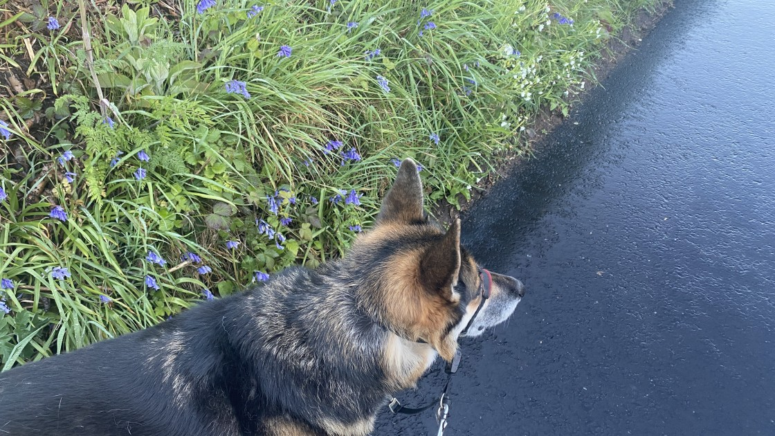 """""""Wild flowers looking pretty next to chloe - May 2021"""" stock image"""