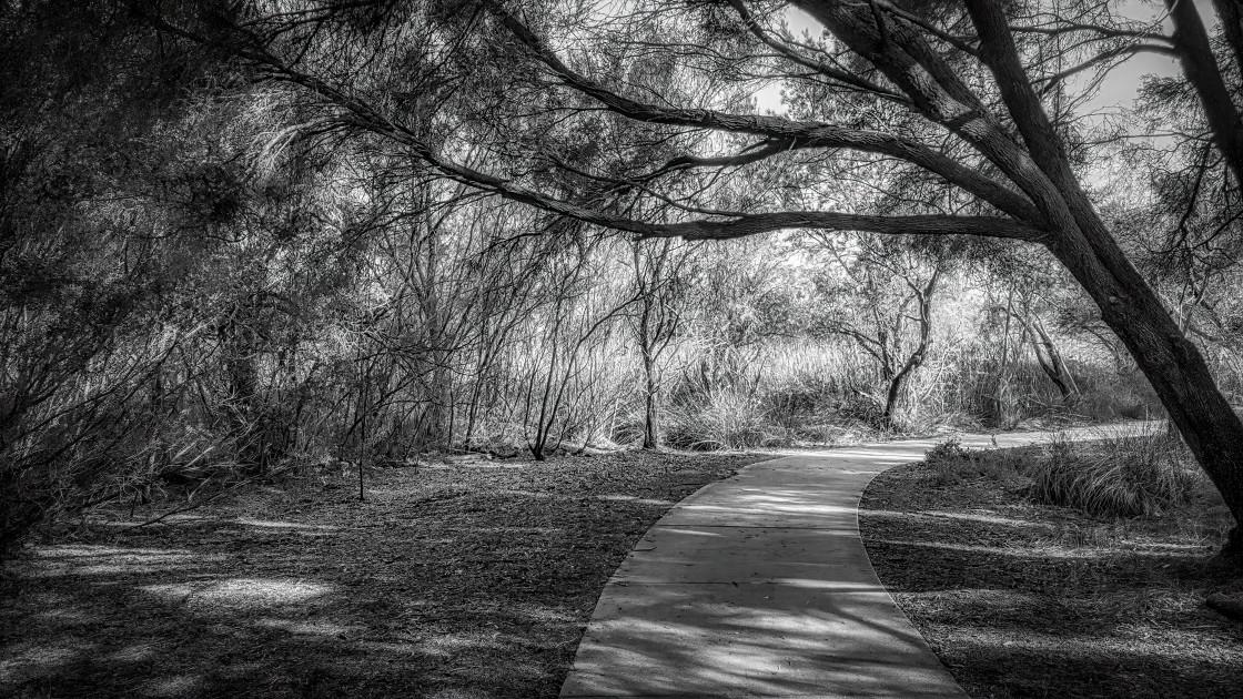 """""""Lakeside Bushland Pathway"""" stock image"""