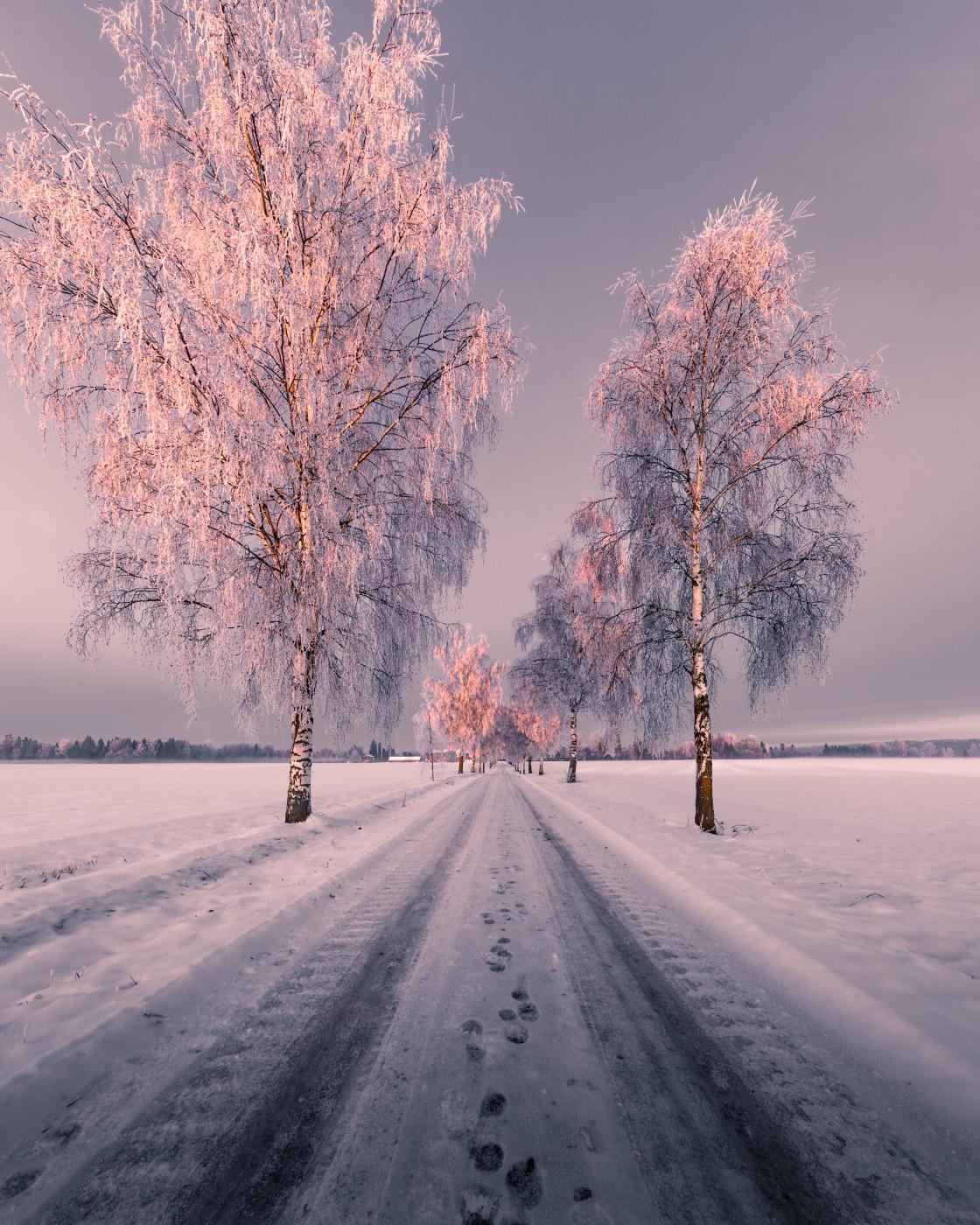 """The Light - Winter Sunset Road. Photo by Thomas Waerness"" stock image"