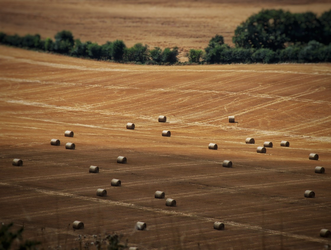 """""""Dunstable Downs Hay Harvest"""" stock image"""