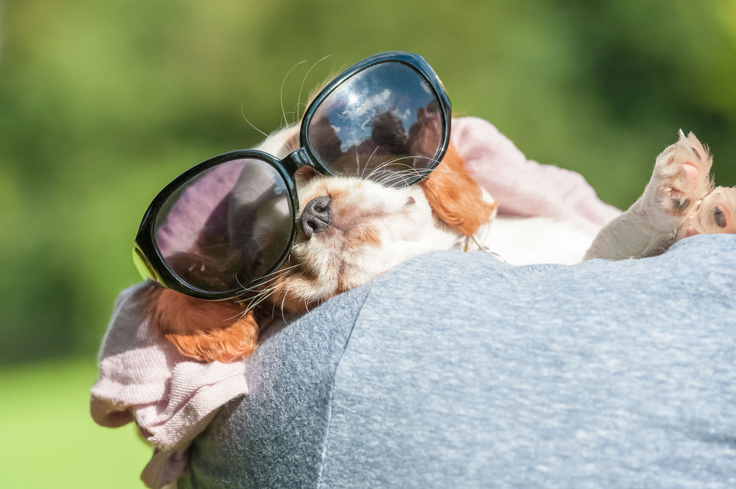 puppy in sunglasses