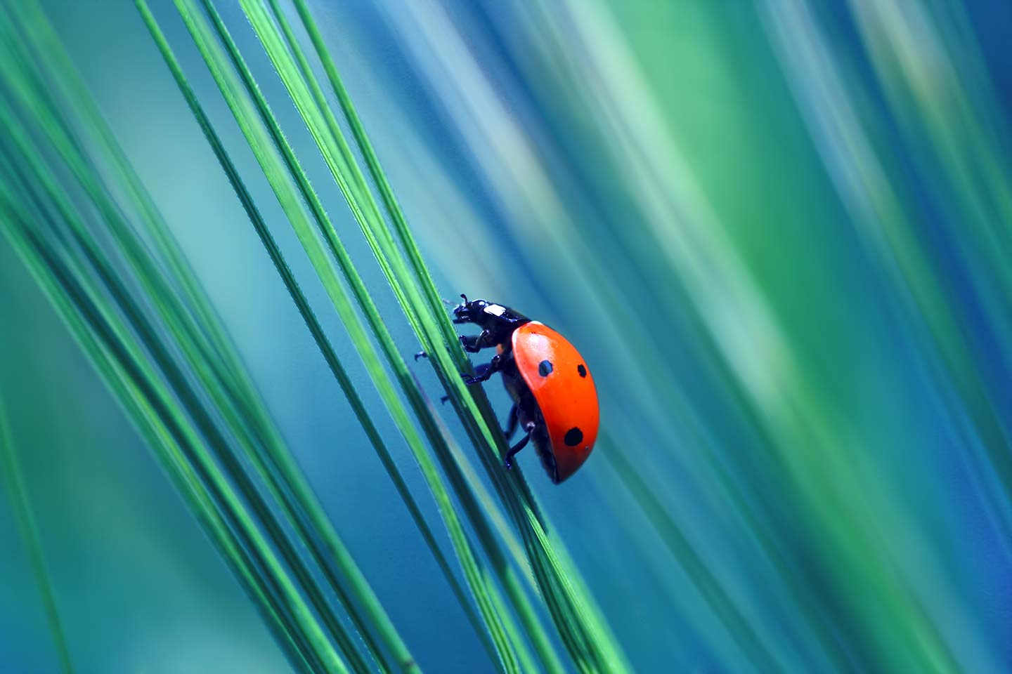 Ladybug found in the grass
