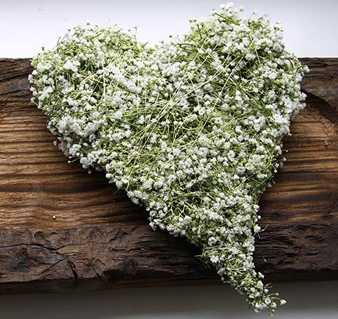 Schleierkraut Herz auf Holz