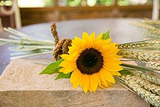 Getreidegarben und Sonnenblume