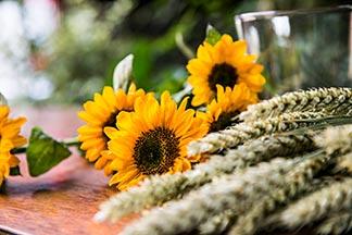 Sonnenblumen Ähren