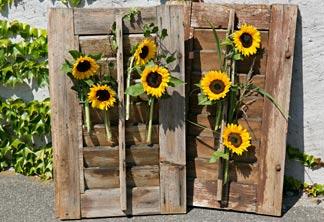 Sonnenblumen am fensterladen