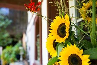 Sonnenblumen am Haus