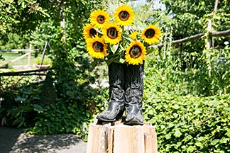 Sonnenblumen in Stiefel