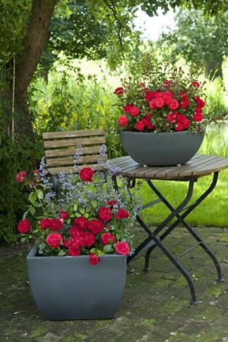 Blumen auf Gartentisch