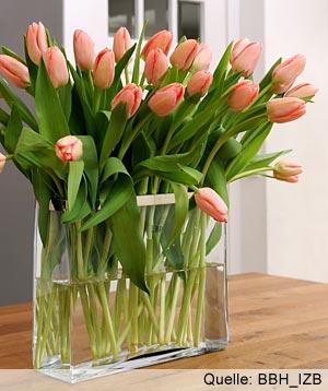 Fleurop & tulipani - Qui potrete conoscere i fiori