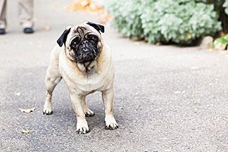 Fleurop Shop Hund Bubu