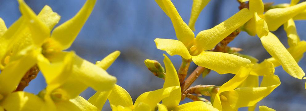 Der Frühling macht happy