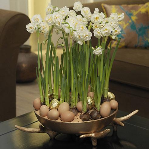 Narzissen und goldene Eier