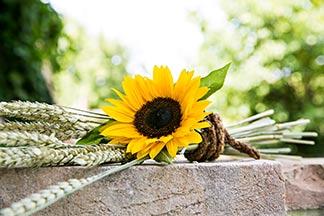 Sonnenblume Ähren