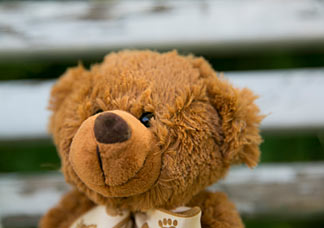 Teddybärenkopf