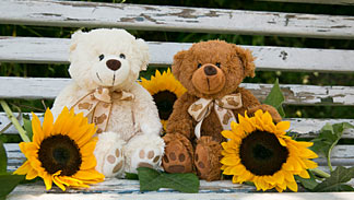 Teddybären mit Sonnenblumen